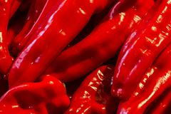 Red paprika juicy appetizing background long pods bright close-up base vegetable design stock photography