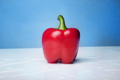 Red paprika over blue backround. Photo of one red paprika over blue backround Royalty Free Stock Photos