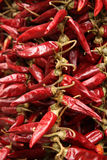 Red paprika Stock Photography