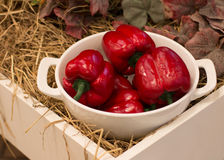 Red Paprika in White bowl Royalty Free Stock Photo