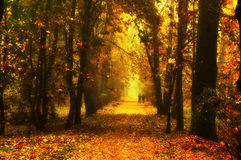 Red park alley Royalty Free Stock Photography