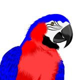 Red parrot Royalty Free Stock Images