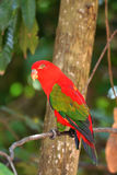 Red Parrot bird Stock Photo