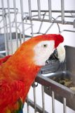 Red parrot in cage. Stock Photography