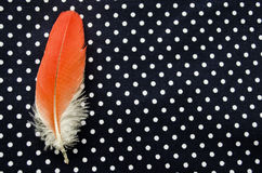 Red parrot feather on polka dot Stock Image