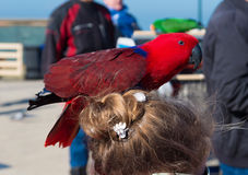Red parrot on girls head Royalty Free Stock Photography