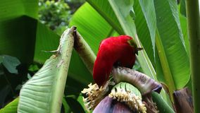 Red parrot makes sounds on the plant stock footage