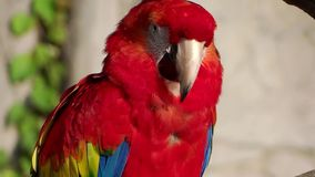 Red parrot Stock Photos