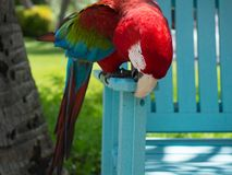 Red Parrot on tropical island stock images