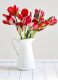 Red parrot tulips Stock Photo