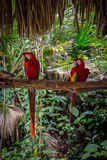 Red Parrots. Sitting in the jungle Stock Photography