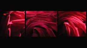 Red passion. Rose texture like velvet Stock Photo