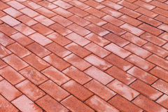 Red paving stones Royalty Free Stock Photography