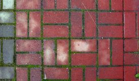 Red paving stones with moss between them royalty free stock photos