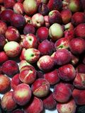 Red peaches Royalty Free Stock Photos