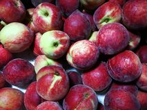 Red peaches. Close up of full red peaches Stock Images