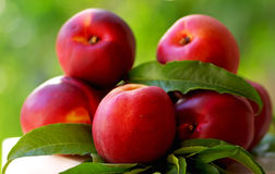 Red peachs. Royalty Free Stock Image