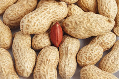 Red peanut kernel closeup in shells Royalty Free Stock Photos