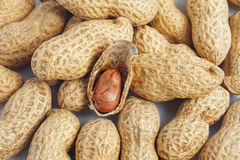 Red peanut kernel in shell Royalty Free Stock Photos