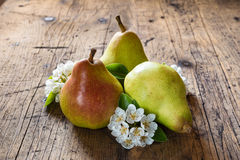 Red pear with flowering pear Royalty Free Stock Image