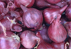 Red Pearl Onions in Basket Stock Images