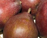 Red pears Royalty Free Stock Photo