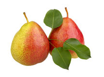 Red pears with leaves Royalty Free Stock Image