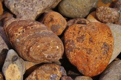 Red pebble Stock Photography