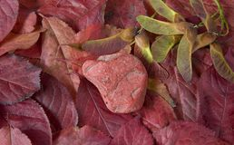 Red pebble on red leaves, atumn still life Royalty Free Stock Photo