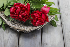 Red peonies in grey basket on wooden table Royalty Free Stock Image