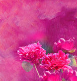 Red peonies. Painting. Oil texture Flower background Royalty Free Stock Photography