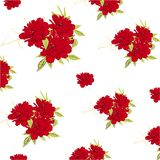 Red Peonies Pattern on white background,  stock photography