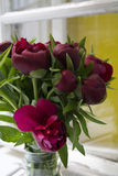 Red Peonies in vase on the window Royalty Free Stock Image