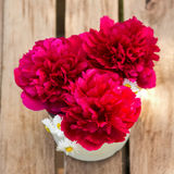 Red peonies in vase on wood background Royalty Free Stock Images