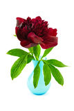 Red peony in blue vase Royalty Free Stock Photos