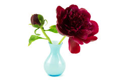 Red peony with blue vase Stock Images