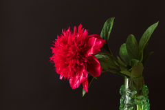 red peony flower and leaves in a vase on a black Royalty Free Stock Images