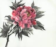 Red peony flower stock photo