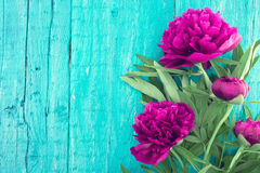 Red peony flower on turquoise rustic wooden background with empt Stock Photo
