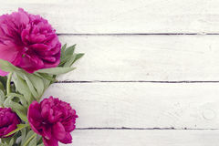 Red peony flower on white rustic wooden background with empty sp Royalty Free Stock Image