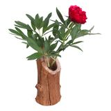 Red peony flower in wooden vase Royalty Free Stock Images
