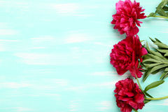 Red peony flowers Royalty Free Stock Image