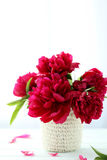 Red peony flowers Stock Photography