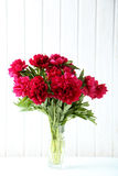 Red peony flowers Stock Photo