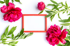 Red peony flowers and empty photo frame on white Royalty Free Stock Photo
