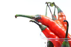 Red peper Royalty Free Stock Photo