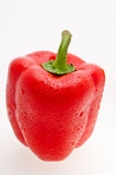 Red peper Royalty Free Stock Photography