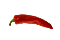 Red Pepper. Isolated on White Royalty Free Stock Image