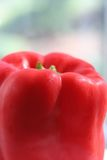 Red pepper. In window Royalty Free Stock Photo