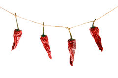 Red pepper. Dries on a rope royalty free stock photos